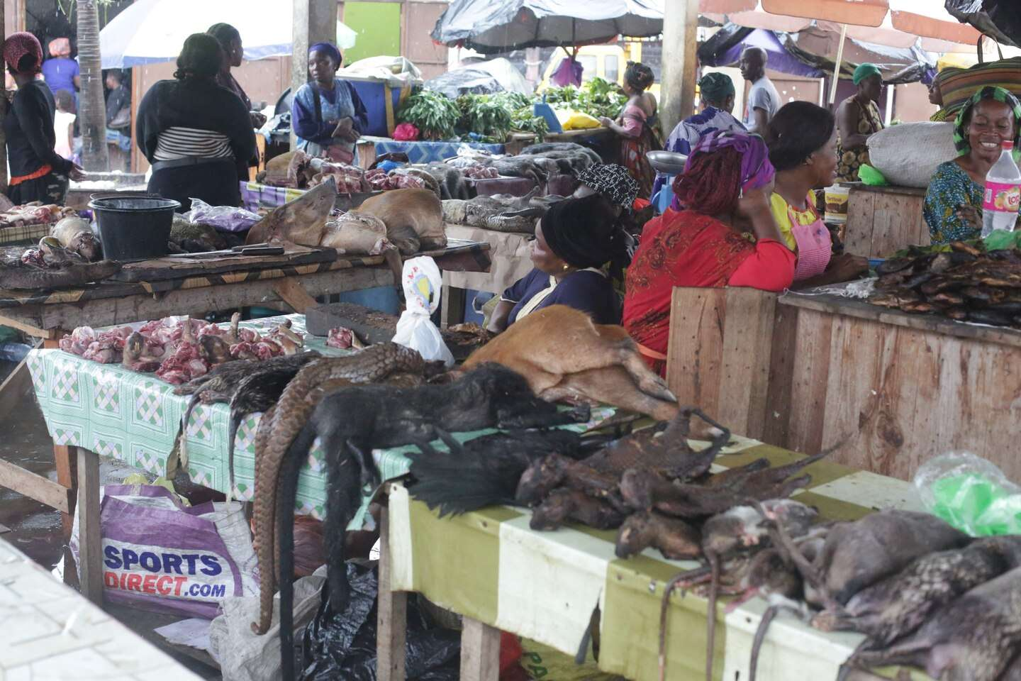 exotic animals are sold in Libreville, Gabon