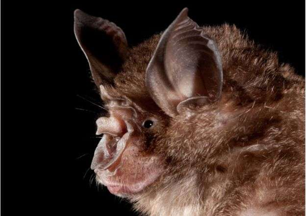 The virus is thought to have originated in wildlife - most likely in bats